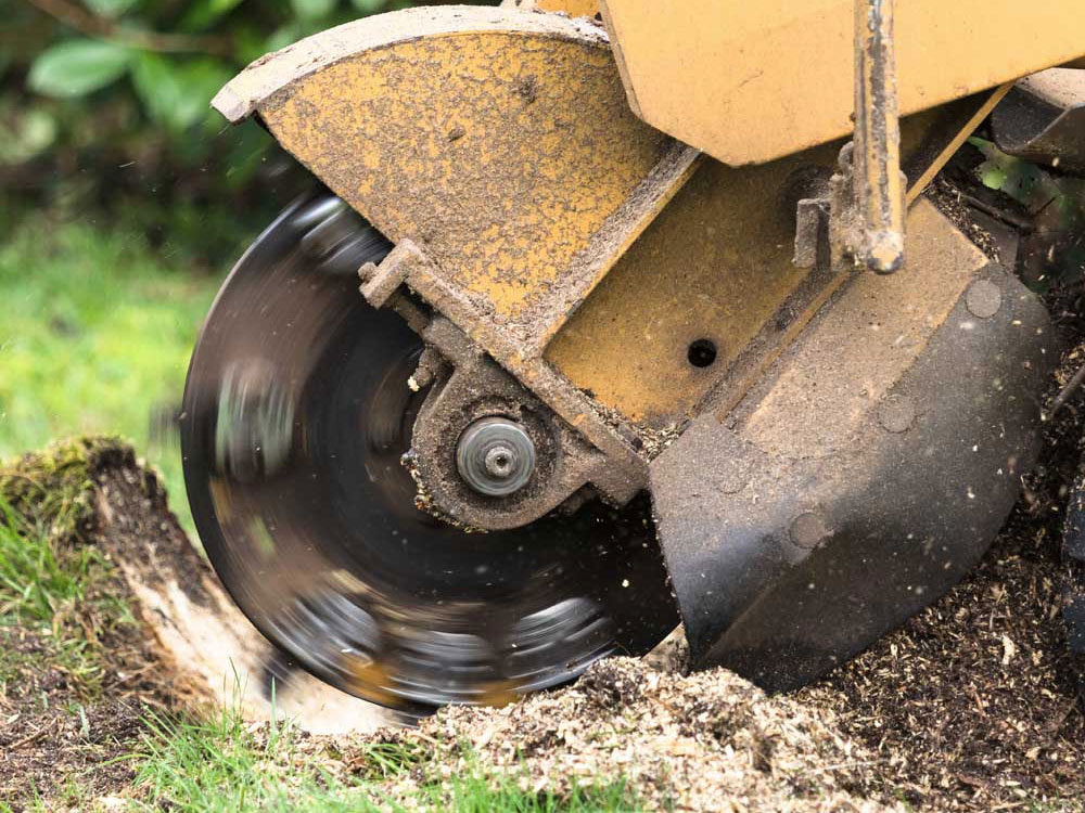 Tree Stump Grinding Services Doncaster