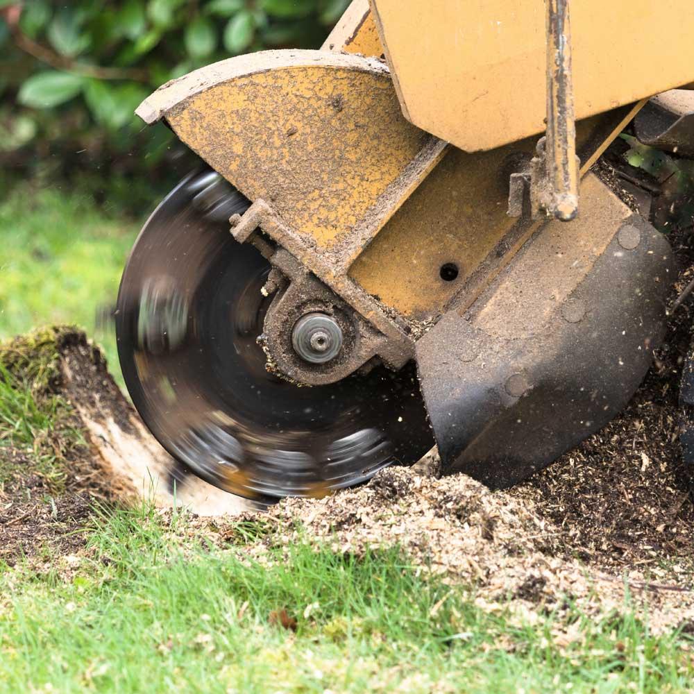 Tree Stump Grinding Services